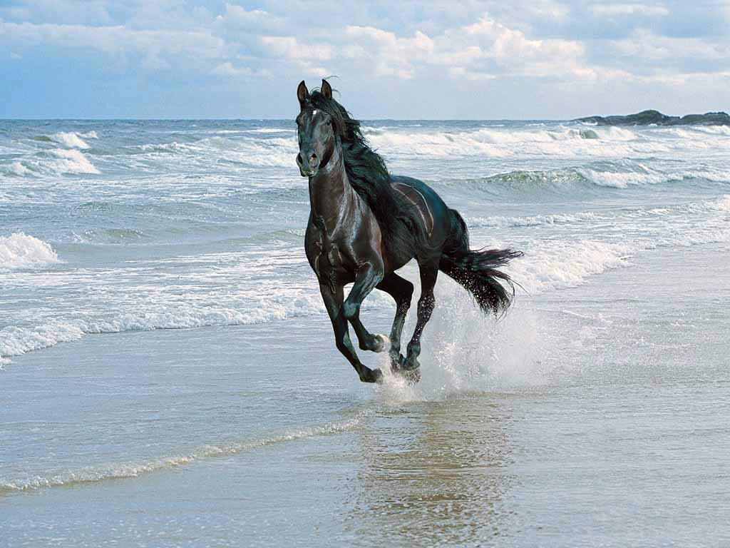 Papel de parede Cavalos fotos grátis   Papéis de parede