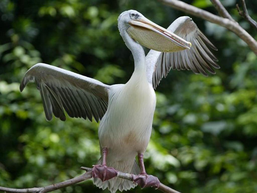 O Pelicano Distribuidora Canal Natureza: Galeri...